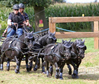Rachael Kriete gewinnt Landesmeisterschaft Fahren Pony Vierspänner