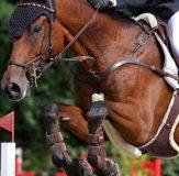 DJM Riesenbeck Springen: Platz vier für Mylen Kruse